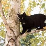 木の上にいる黒猫クロネコ